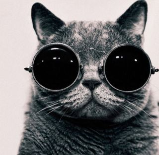 Shady-cat
