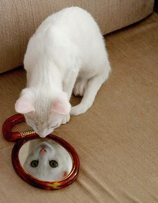 Cat_mirror_flickr