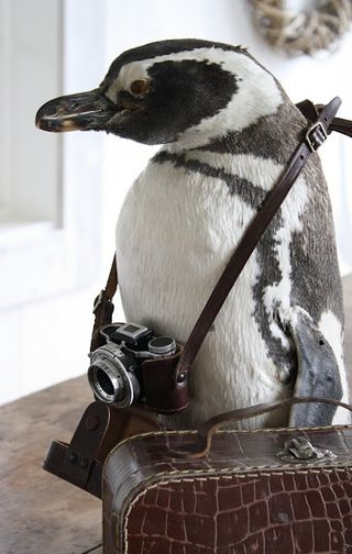 Penguin_with_camera_tumblr