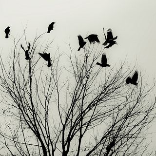 Winter_birds